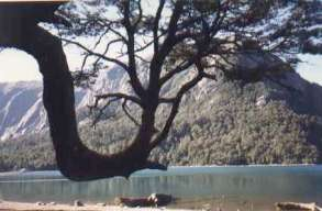 Lake in Chile and earth charter. Image by Information for Action, a website for conservation and environmental issues offering solutions