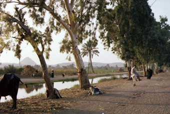 Canal off the River Nile, Cairo, with pyramid in distance. Information for Action