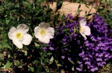 Flowers and soil erosion. Image by Information for Action, a website for conservation and environmental issues offering solutions