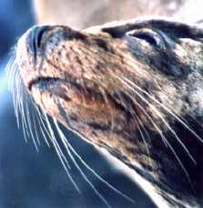 Seal on water pollution page. Image by Information for Action, a website for conservation and environmental issues